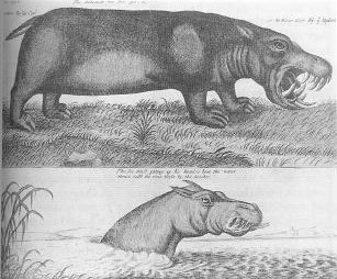 C18 image of killer hippos